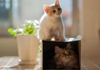 Free Two Kittens Picture for Android, iPhone and iPad
