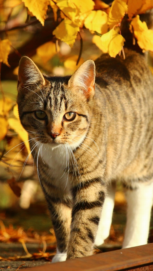 Tabby cat in autumn garden screenshot #1 640x1136