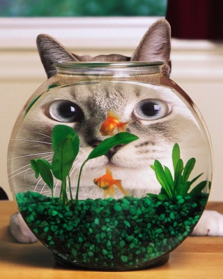 Aquarium Cat Funny Face Distortion Background for Nokia C1-01