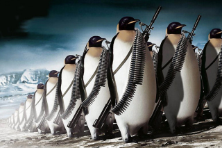 Free Penguins Soldiers Picture for Android, iPhone and iPad