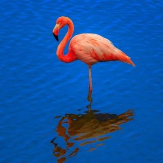 Flamingo Arusha National Park papel de parede para celular para iPad 3
