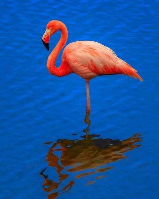 Flamingo Arusha National Park Wallpaper for Nokia C1-01
