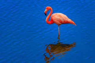 Flamingo Arusha National Park Background for Samsung Galaxy Ace 3