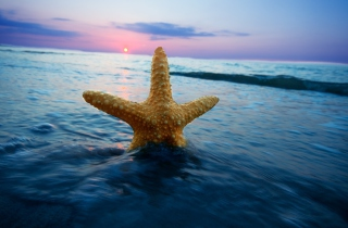 Sea Star At Sunset Background for Android, iPhone and iPad