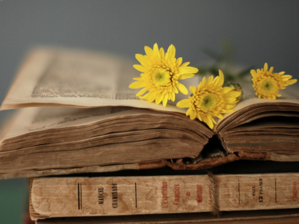 Screenshot №1 pro téma Old Book And Yellow Daisies 1024x768