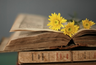 Old Book And Yellow Daisies sfondi gratuiti per cellulari Android, iPhone, iPad e desktop