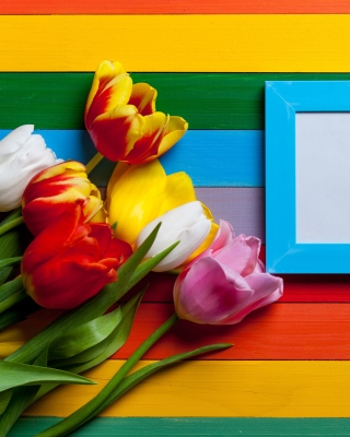 Colorful Tulips Background for Nokia Asha 310