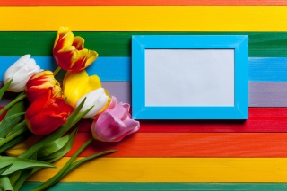 Colorful Tulips Background for Widescreen Desktop PC 1680x1050