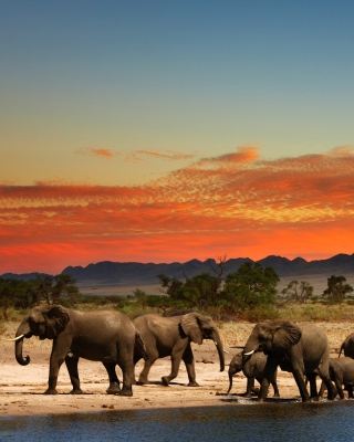 Free Herd of elephants Safari Picture for Nokia Asha 311