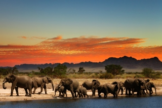 Free Herd of elephants Safari Picture for 1600x1200