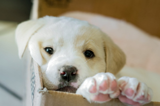 White Puppy Picture for Fullscreen Desktop 1024x768