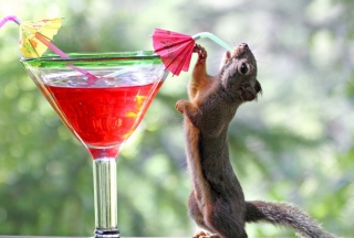 Free Squirrel Drinking Cocktail Picture for Android, iPhone and iPad