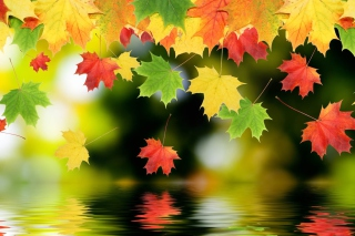 Free Falling Leaves Picture for Android, iPhone and iPad