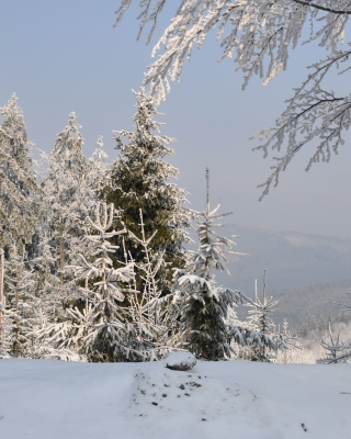 Snow landscape Wallpaper for 240x320