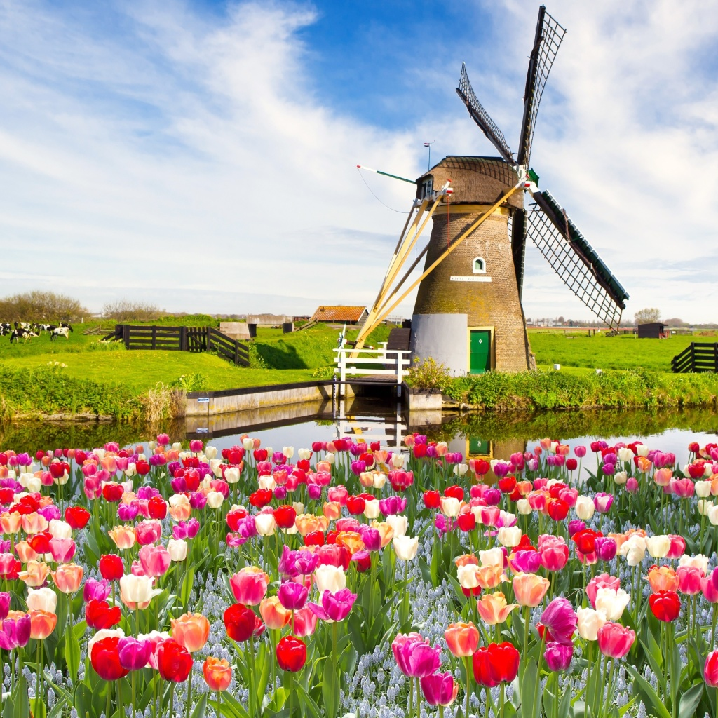 Sfondi Mill and tulips in Holland 1024x1024