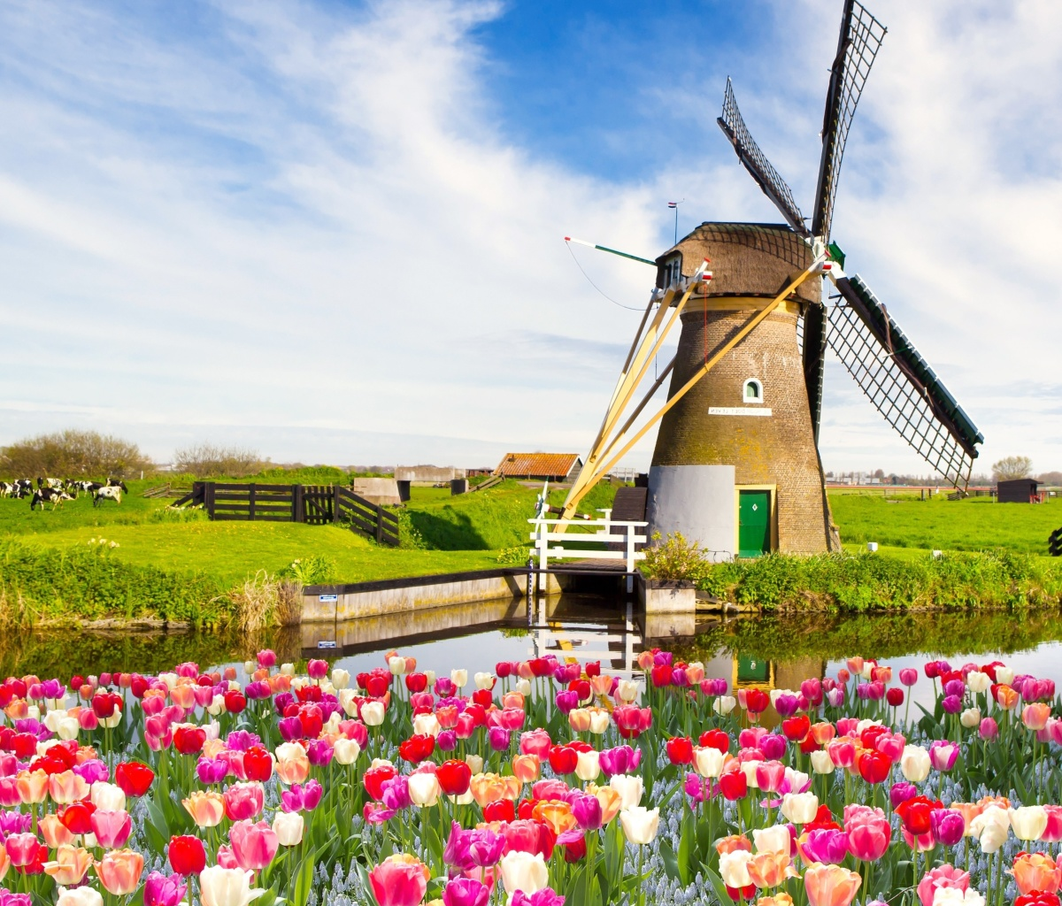 Sfondi Mill and tulips in Holland 1200x1024