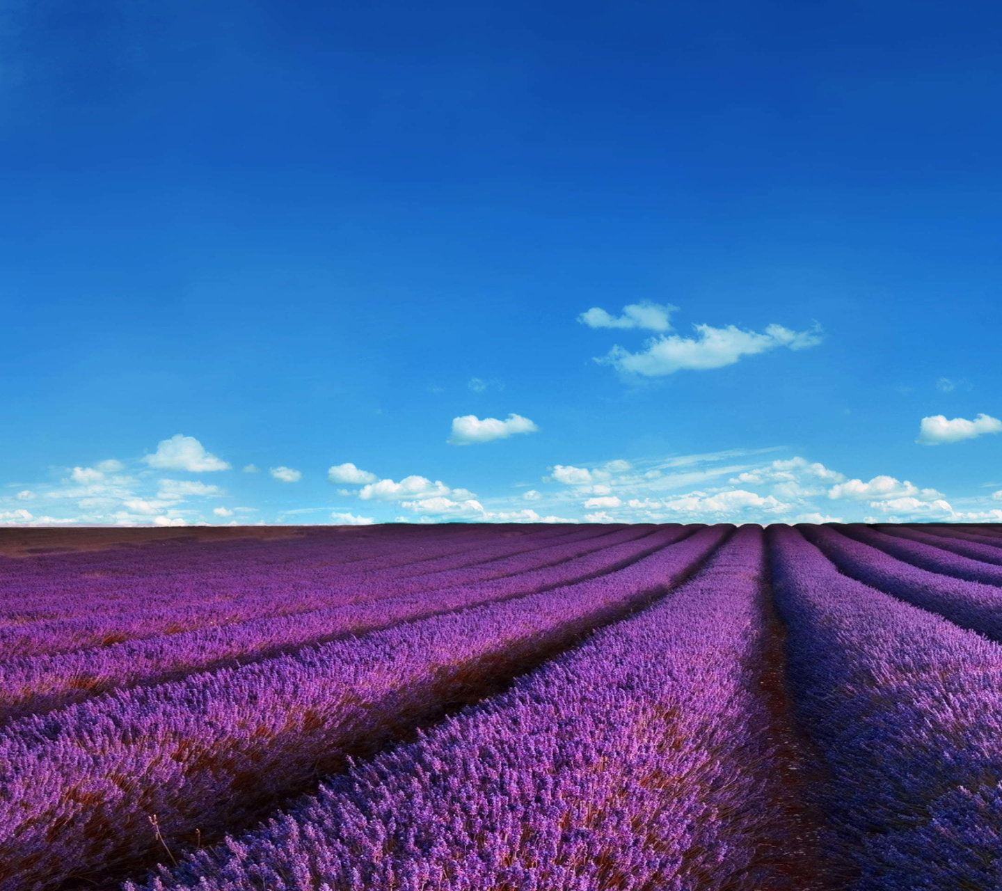 Sfondi Lavender Fields Location 1440x1280