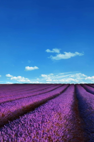 Sfondi Lavender Fields Location 320x480