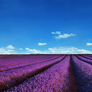 Kostenloses Lavender Fields Location Wallpaper für iPad 3
