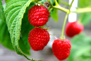 Raspberries Macro Photo Picture for Android, iPhone and iPad