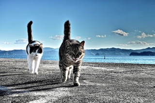 Cats Walking At Beach - Obrázkek zdarma