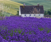 Screenshot №1 pro téma House In Lavender Field 176x144