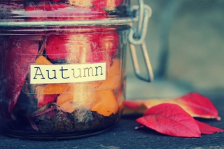 Free Autumn In Jar Picture for Fullscreen Desktop 1280x960