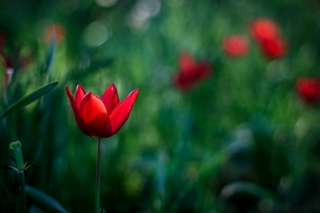 Bright Red On Deep Green Bokeh sfondi gratuiti per cellulari Android, iPhone, iPad e desktop
