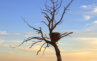 Eagle Nest Picture for Android, iPhone and iPad