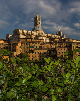 Cathedral of Siena Background for iPhone 6 Plus