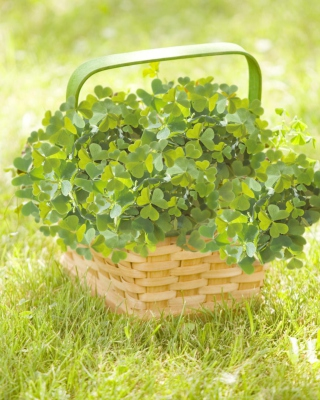 Free Clover Basket Picture for Nokia C1-00