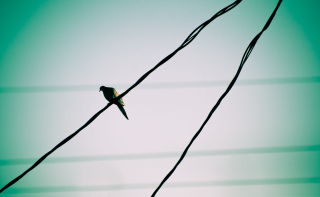 Pigeon On Wire Background for Android, iPhone and iPad