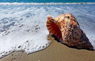 Shell And Beach Background for Android, iPhone and iPad