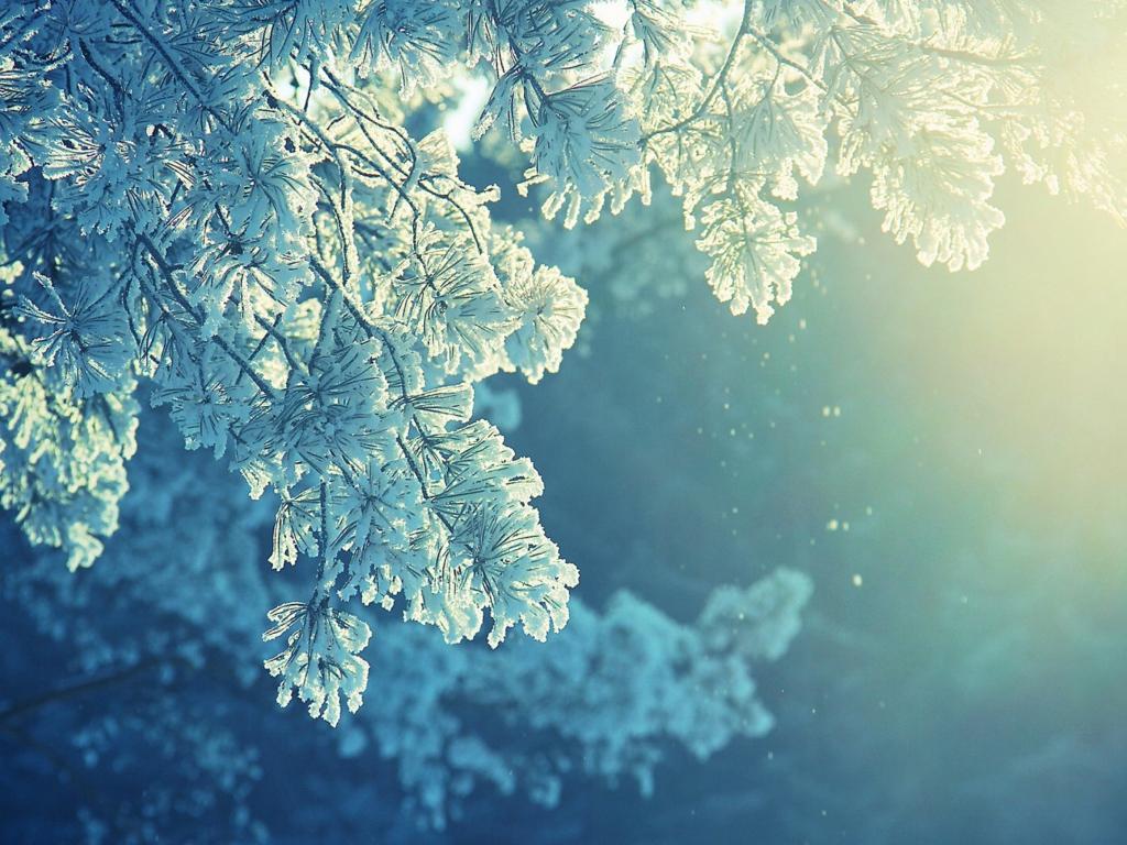 Snowfall by Scott Buckley