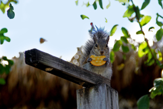 Squirrel Eating Cookie Wallpaper for Android, iPhone and iPad