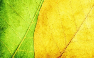 Kostenloses Yellow And Green Wallpaper für Android, iPhone und iPad