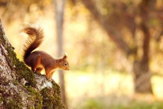 Squirrel In Forest Wallpaper for Android, iPhone and iPad