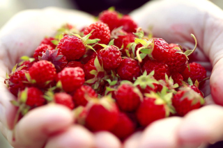 Macro HD Woodland Strawberry sfondi gratuiti per cellulari Android, iPhone, iPad e desktop