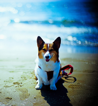 Happy Dog At Beach - Fondos de pantalla gratis para iPad 2