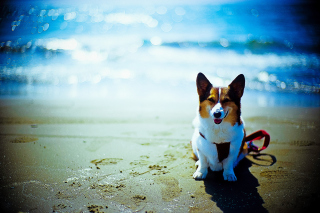 Happy Dog At Beach sfondi gratuiti per cellulari Android, iPhone, iPad e desktop