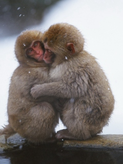 Screenshot №1 pro téma Monkey Love 240x320