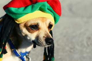 Rasta Dog Picture for Desktop 1280x720 HDTV