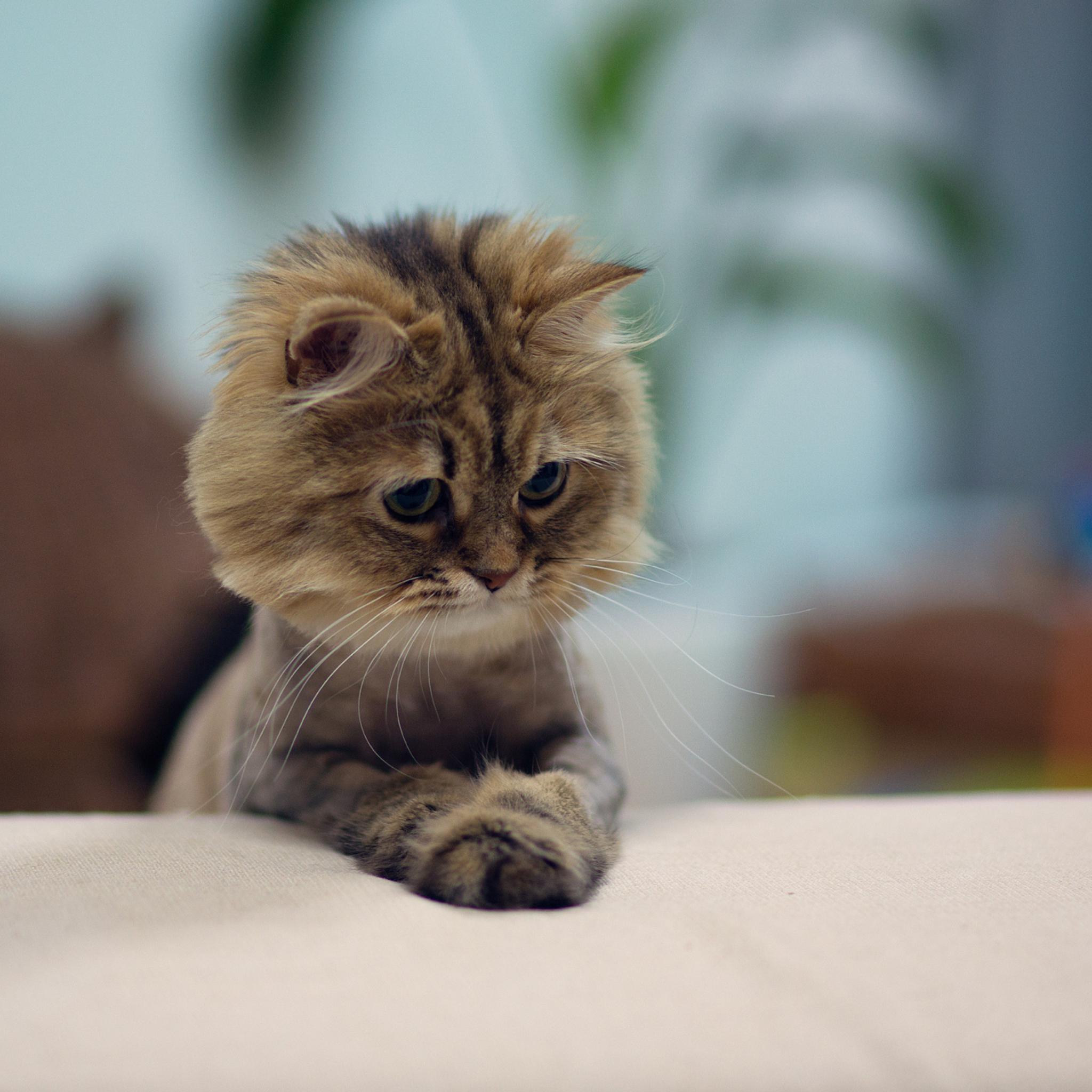 случится, картинки с умоляющими котиками потеряло первоначальный