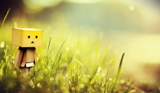 Danbo In Green Grass Background for Android, iPhone and iPad