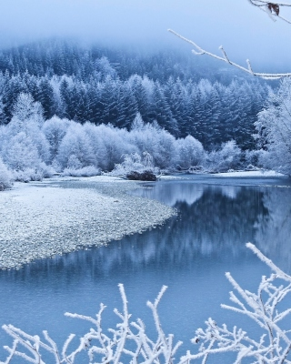 Winter Snow Background for Nokia Asha 310