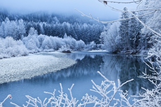 Winter Snow Background for Android, iPhone and iPad