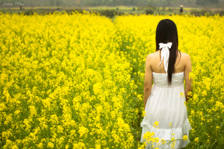 Girl At Yellow Flower Field Background for Android, iPhone and iPad