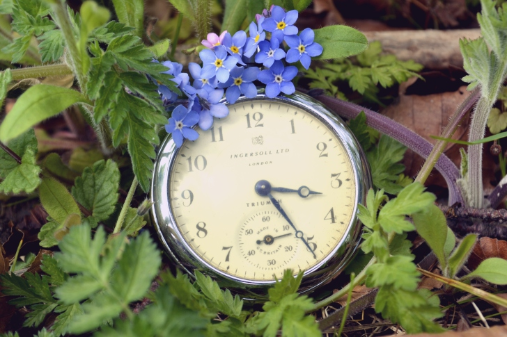 Vintage Watch And Little Blue Flowers wallpaper
