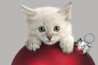 Christmas Kitten Wallpaper for Android, iPhone and iPad