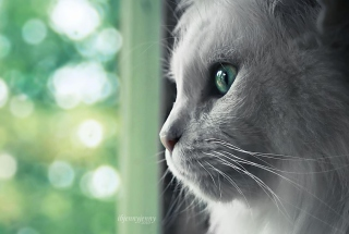 Kostenloses White Cat Close Up Wallpaper für Samsung Galaxy S6